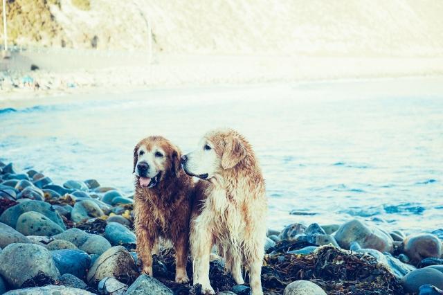 lake-animals-dogs-pets